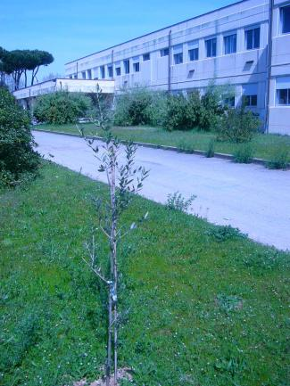 La sede del Liceo Chini